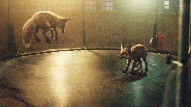 Springender Boxer sorgt für breites Grinsen (Bild: John Lewis)