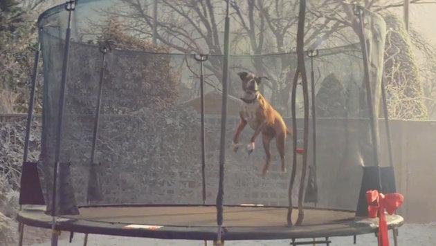 Springender Boxer sorgt für breites Grinsen (Bild: YouTube.com)