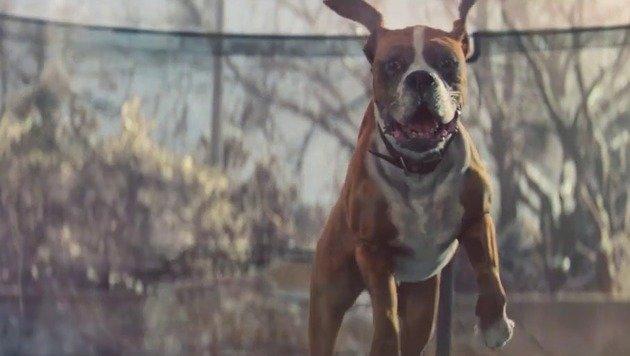 Lustige Tiere, die springen - diesmal: Fuchs! (Bild: YouTube.com)