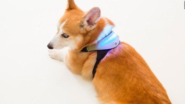 """""""Inupathy"""" soll die Gefühle des Hundes sichtbar machen. (Bild: Inupathy)"""