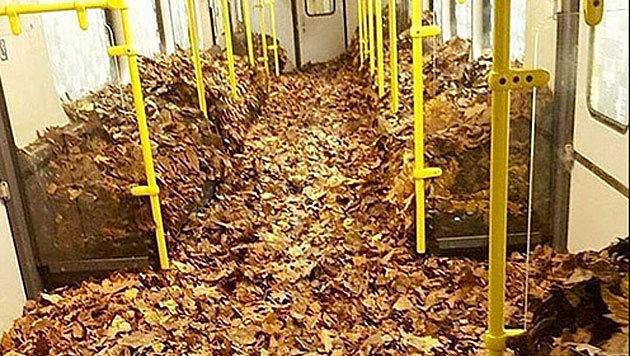 Einen ganzen Waggon haben Unbekannte mit Blättern gefüllt. (Bild: facebook.com/Berlin Writers)