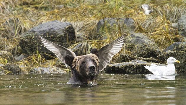 """Angel Bear"" (c) Adam Parsons (Bild: comedywildlifephoto.com/Adam Parsons)"