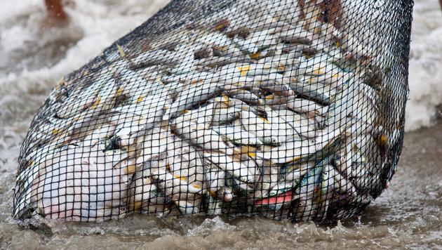EU-Staaten wollen Tiefsee-Fischfang reduzieren (Bild: thinkstockphotos.de (Symbolbild))