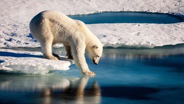 Jahr 2017 mit Hitzewellen in der Arktis gestartet (Bild: APA/AFP/European Geosciences Union/MARIO)