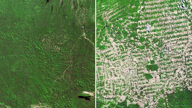 Regenwald in Rondonia (Brasilien) im Juni 1975 (links) bzw. im August 2009 (rechts) (Bild: NASA)