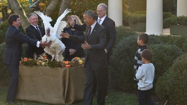 Obama begnadigte letztmalig Thanksgiving-Truthähne (Bild: APA/AFP/NICHOLAS KAMM)