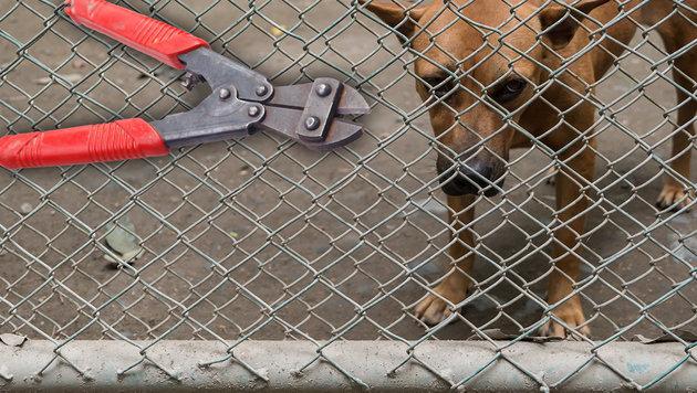 Mann wollte seinen Hund aus Tierheim stehlen (Bild: thinkstockphotos.de)