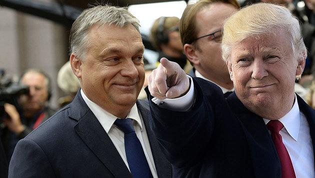 """Schwarzes Schaf"" Orban wieder in USA erwünscht (Bild: APA/AFP/THIERRY CHARLIER, APA/AFP/MANDEL NGAN)"