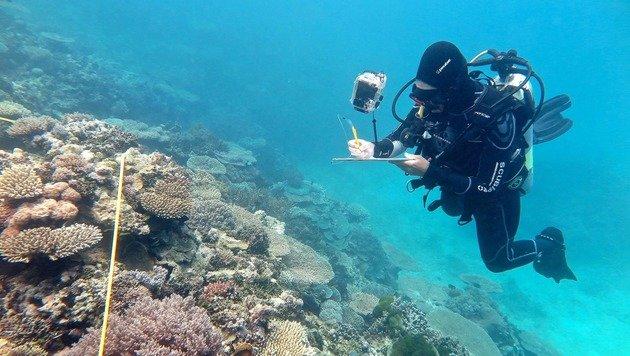 Korallenbleiche so schlimm wie noch nie zuvor (Bild: ARC Centre of Excellence for Coral Reef Studies)