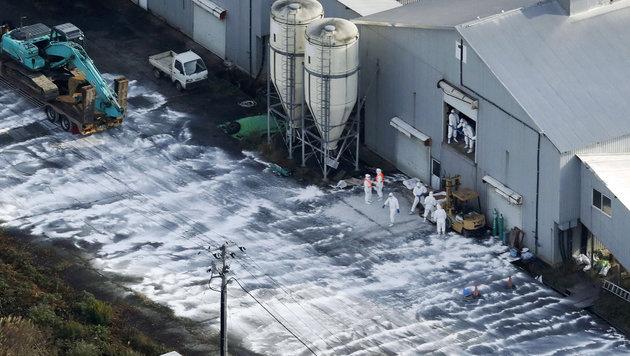 Japan keult Hunderttausende Hühner und Enten (Bild: AP/Kyodo News)