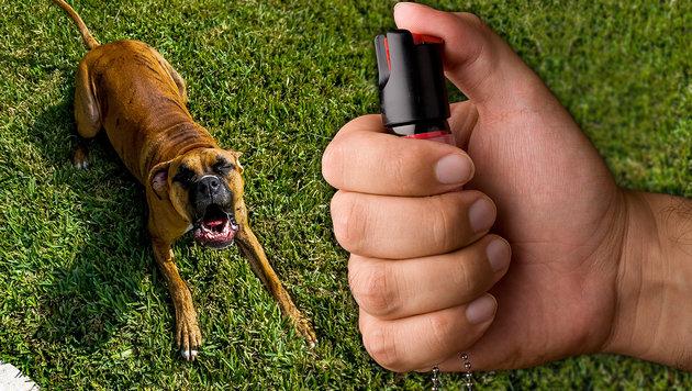 30-Jähriger hetzte seinen Hund auf Polizisten (Bild: thinkstockphotos.de (Symbolbild))