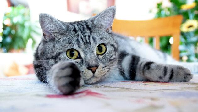Wir suchen die schönsten Tierfotos! (Bild: Günther Graf)