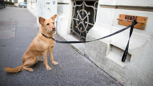 Ein Hund vor einem Wahllokal in Wien (Bild: APA/GEORG HOCHMUTH)