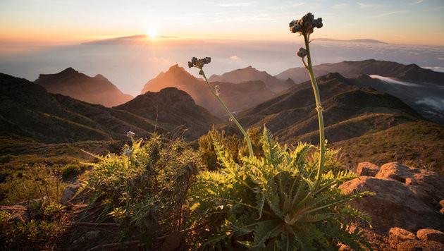 """Spezial-""""Universum"""" über die Kanarischen Inseln (Bild: ORF)"""