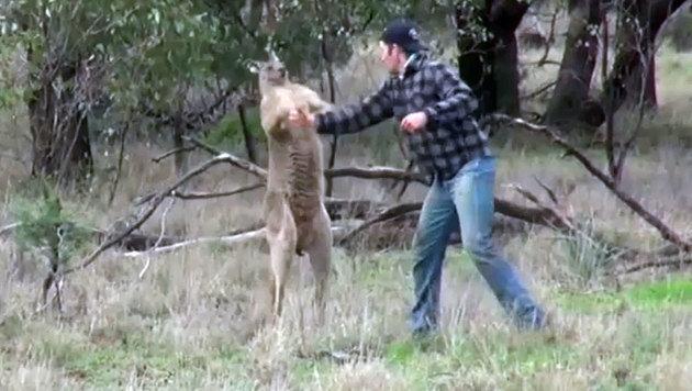 ... auf das Känguru los und verpasste ihm einen Kinnhaken. Dafür erntete der Zoowärter viel Kritik. (Bild: facebook.com)