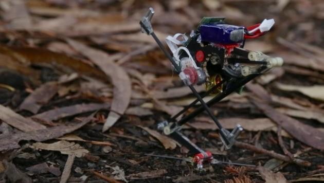 "Roboter ""Salto"" schafft meterhohe Sätze (Bild: UC BERKELEY/Stephen McNally)"