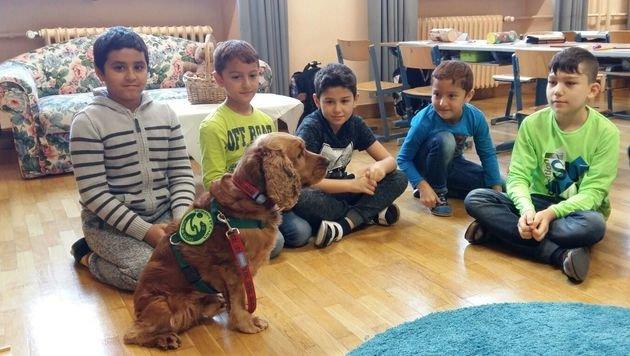 Timmy ist der Liebling der Volksschüler in Traun, er motiviert die Kinder, verbessert das Klima. (Bild: Gabi Bachler-Thurner)