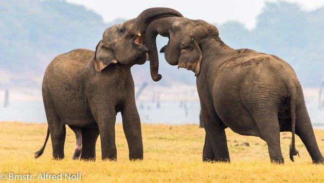 Wir suchen die schönsten Tierfotos! (Bild: Alfred Noll)