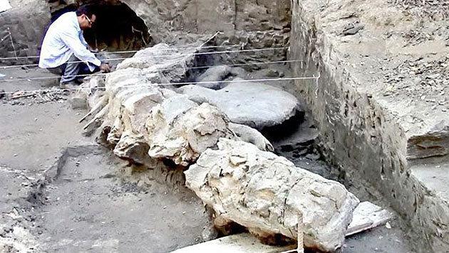 Reste von 1,8 Mio. Jahre altem Hai-Fossil entdeckt (Bild: INAH)