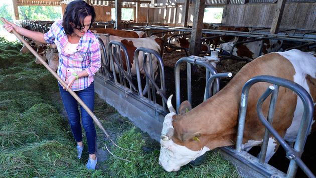 Volksnähe à la Glawischnig: Zu Besuch auf einem Bio-Bauernhof (Bild: APA/ROBERT JAEGER)