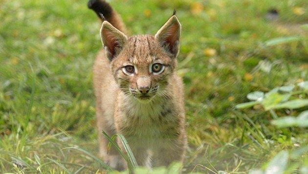 Wir suchen die schönsten Tierfotos! (Bild: Sylvi Pollak)