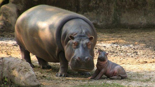 Wir suchen die schönsten Tierfotos! (Bild: Dani Kaiser)