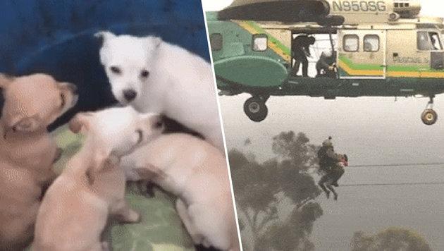 Heli rettet Frauen, Hund und ganzen Wurf Welpen (Bild: twitter.com)