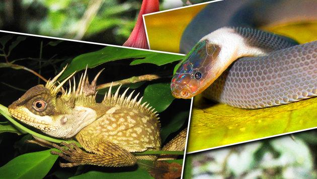 163 neue Arten in der Mekong-Region entdeckt (Bild: WWF/Monthri Sumontha, WWF/Alexander Tynie, WWF/Wande Inta)