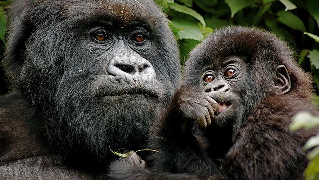 Uganda - Tauchen Sie nach der Perle Afrikas! (Bild: thinkstockphotos.de)
