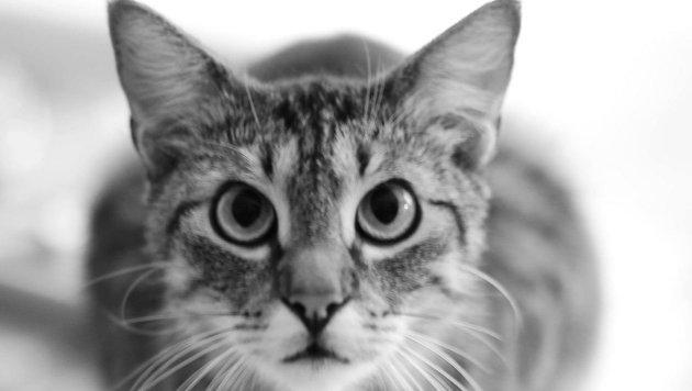 Wir suchen die schönsten Tierfotos! (Bild: Tanja Dolenc)