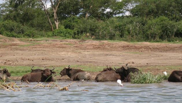 Uganda - Tauchen Sie nach der Perle Afrikas! (Bild: Denise Zöhrer)