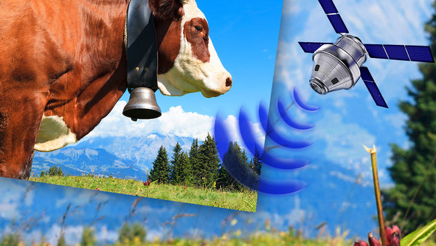Skurriler Streit im Ländle: GPS ersetzt Kuhglocken (Bild: thinkstockphotos.de)