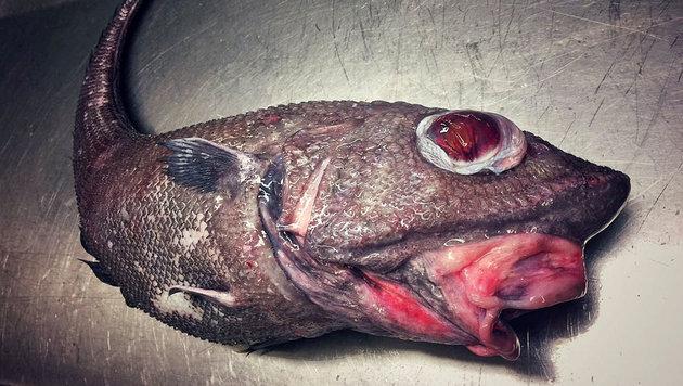 Ein Grenadierfisch mit riesigen Augen und roten Lippen (Bild: twitter.com/Roman Fedortsov)