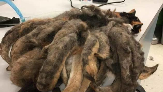 """So verfilzt war """"Hidey"""", als man sie fand - die Tierärzte glaubten ihren Augen kaum. (Bild: Animal Rescue League Shelter & Wildlife Service)"""