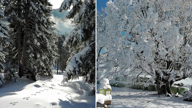 Wintereinbruch: Bis zu 50 Zentimeter Neuschnee (Bild: krone.at-Leserreporter Bernhard Leitner)
