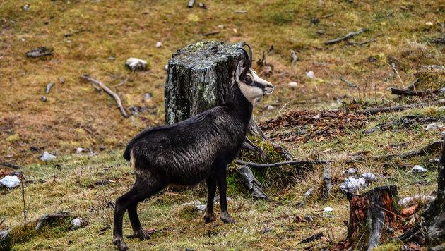 Wir suchen die schönsten Tierfotos! (Bild: Franz Zemasch)