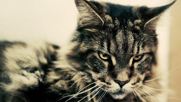 Wir suchen die schönsten Tierfotos! (Bild: Christoph Stuhlberger)