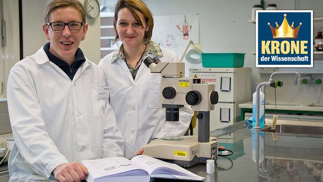 Hans-Peter-Führer und Carina Zittra bei der Bestimmung von Stechmücken (Bild: Vetmediathek/Bernkopf Michael)