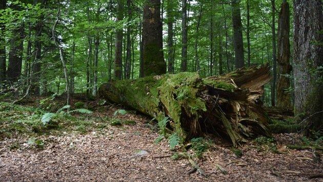Wildnisgebiet in weite Ferne gerückt (Bild: Land Steiermark)