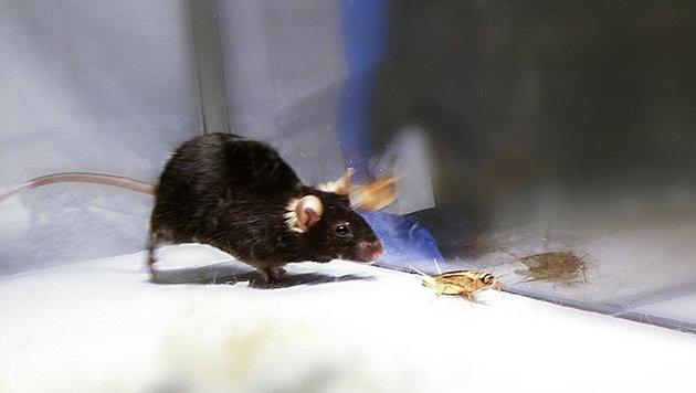 Maus mutiert auf Knopfdruck zur Killermaschine (Bild: © Ivan de Araujo)