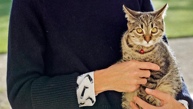 Eine der beiden Katzen von Alexa Wesner (Bild: Klemens Groh)
