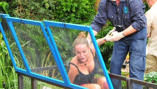 Schlammkrabben und Ratten: Gina-Lisa gibt auf und wird von Dr. Bob aus der Glaskammer geholt. (Bild: RTL)