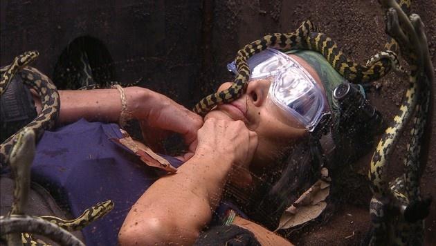 Kader Loth auf Tuchfühlung mit Schlangen. (Bild: RTL)