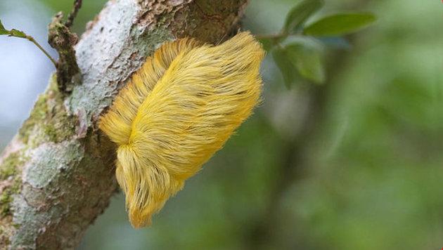 Biologe benennt neue Mottenart nach Donald Trump (Bild: APA/dpa/Jeff Cremer)