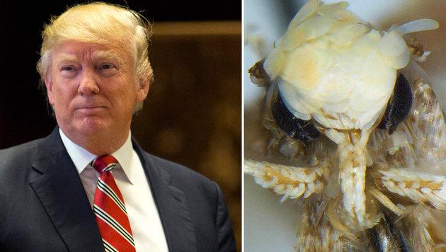 Biologe benennt neue Mottenart nach Donald Trump (Bild: AFP/Dominick Reuter, Dr. Vazrick Nazari (CC-BY 4.0))