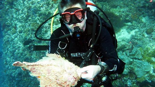 In seichten tropischen Gewässern wie in Thailand lauert tödliche Gefahr (Symbolbild). (Bild: Haus des Meeres)
