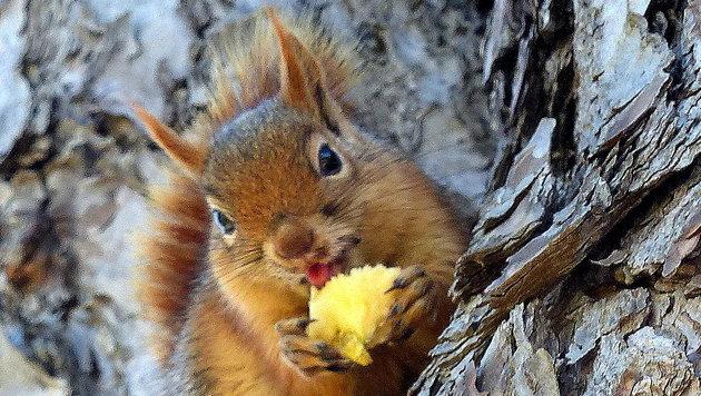 Wir suchen die schönsten Tierfotos! (Bild: Christa Posch)
