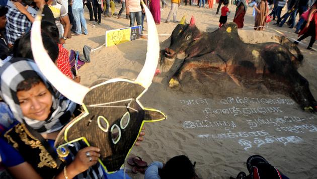 Zwei Tote bei illegalen Stierkämpfen in Indien (Bild: AFP)