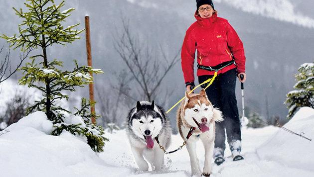 Ein Erlebnis: Huskywandern rund um den Traunsee. (Bild: Markus Wenzel)
