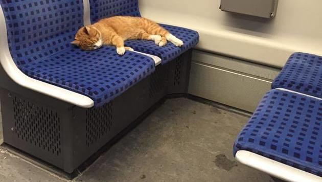 Deutschland: Katze alleine in der Bahn unterwegs (Bild: Facebook.com/Patrick Maurerâ00E)